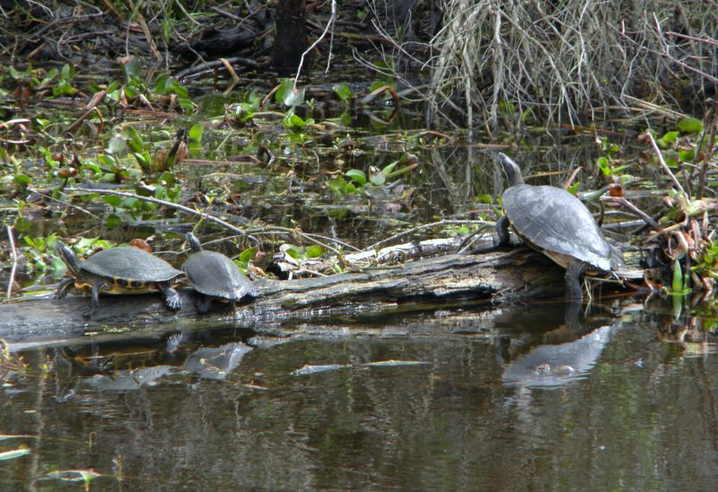 Jean Lafitte Swamp Tour wildlife